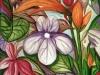 Emerging Birdflower