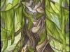 Cedar of Compassion
